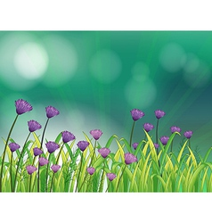 A garden with violet flowers vector image