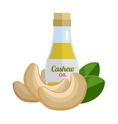 cashew oil in flat design vector image