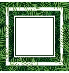 frame tropical palm leaf vector image