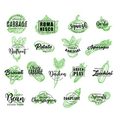 vegetables greenery and salads lettering vector image