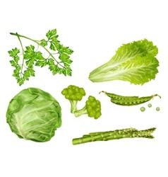 Green vegetables set vector image