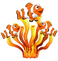 Clown fish swimming around coral reef vector