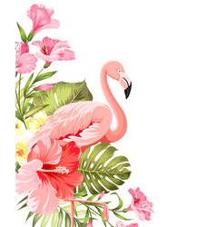 flamingo background design tropical flowers vector image