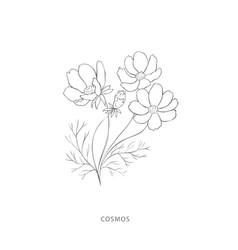 Hand drawn cosmos flowerplant design elements vector