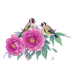 hand drawn goldfinches sitting on pink peony vector image
