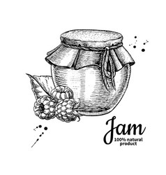 raspberry jam glass jar drawing frui vector image