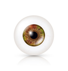 realistic detailed human eyeball vector image