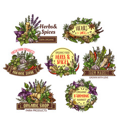spices and herbs sketches of cooking seasonings vector image