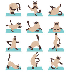 Cats yoga siamese cats different yoga poses and vector