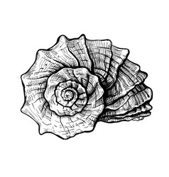 seashell handdrawn sketch vector image