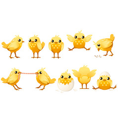 Set cute little chick walk side view cartoon vector