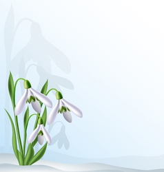 Text background with snowdrops vector image