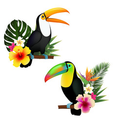 Toucan set vector