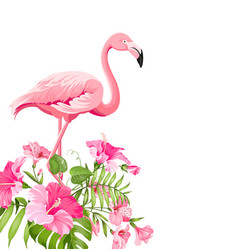 beautiful tropical image with pink flamingo and vector image