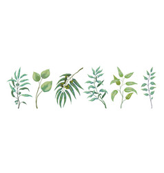 Eucalyptus plants greenery nature branches and vector