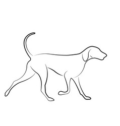 hound dog line art vector image