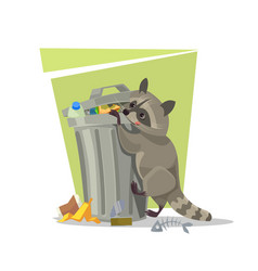 raccoon character looking for food trash can vector image