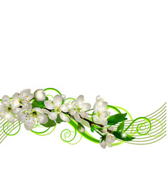 blossoming cherry branch with white flowers vector image