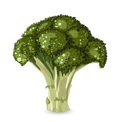 broccoli2 vector image