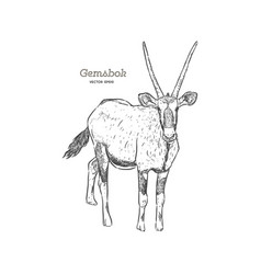 Oryx gazella or gemsbok hand draw sketch vector
