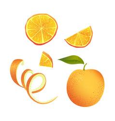 set of parts of orange vector image