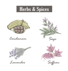 Skech spice and herbs Set vector