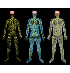 The nervous system vector image