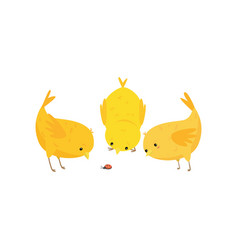 three cute curious yellow chickens look at vector image