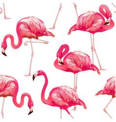 Tropical bird flamingo vector