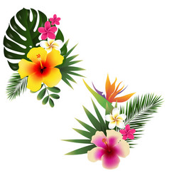 Tropical flower set vector