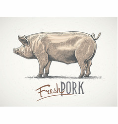 pig in graphic style hand-drawn vector image