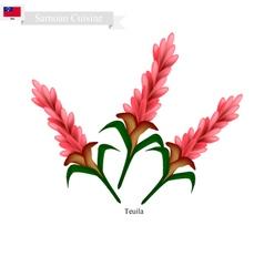 Teuila Flower The National Flower of Samoa vector image vector image
