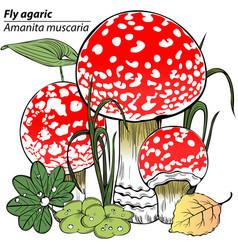 Fly agaric mushrooms vector