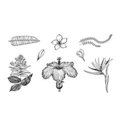 palm plant strelitzia hibiscus plumeria vector image