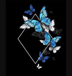 rhombus butterfly morpho vector image