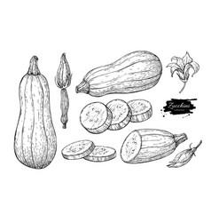 zucchini hand drawn set vector image