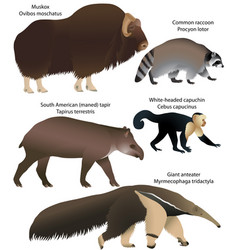animals of america vector image