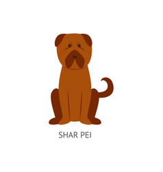 brown shar pei dog drawing in flat cartoon style vector image