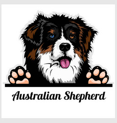 Color dog head australian shepherd breed on white vector