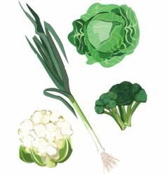 Green vegetable vector