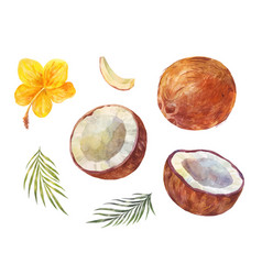 Watercolor coconuts set summer drawing isolated vector