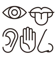 five senses human nervous system vector image