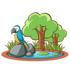 isolated picture blue macaw on rock vector image