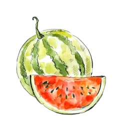 picture of watermelon vector image