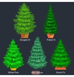 Set of potted christmas tree like fir or vector