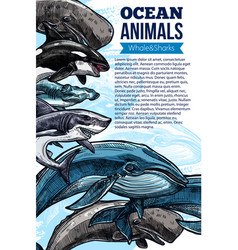 whale and shark ocean animal sketch poster vector image