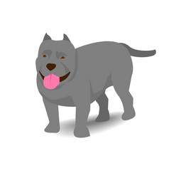pitbull with shadow on white background vector image vector image