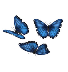 Blue butterflies set vector