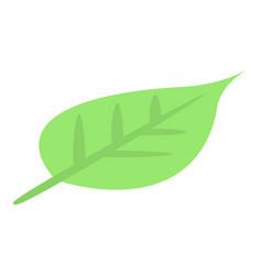 carambola leaf icon isometric style vector image