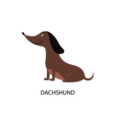 cartoon dachshund dog isolated on white background vector image